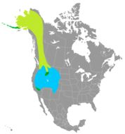 """<span class=""""translation_missing"""" title=""""translation missing: en.medium.untitled.map_image_of, page_name: Mountain finches"""">Map Image Of</span>"""