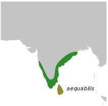 Map of Nightjars