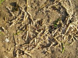 Image of Sand mason