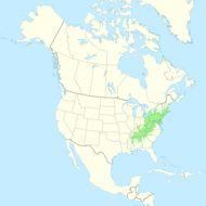 "<span class=""translation_missing"" title=""translation missing: en.medium.untitled.map_image_of, page_name: American chestnut"">Map Image Of</span>"