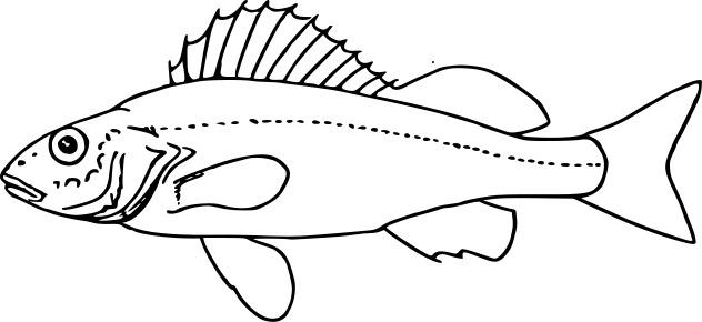 Image of Ruffe