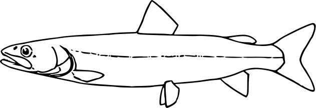 Image of Huchen