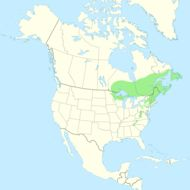 Map of American mountain ash
