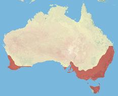 "<span class=""translation_missing"" title=""translation missing: en.medium.untitled.map_image_of, page_name: australasian robins"">Map Image Of</span>"
