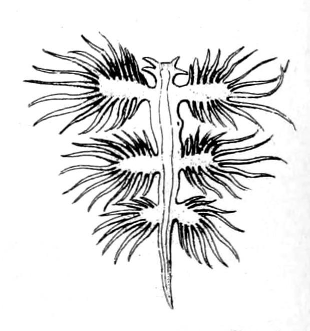 Image of B