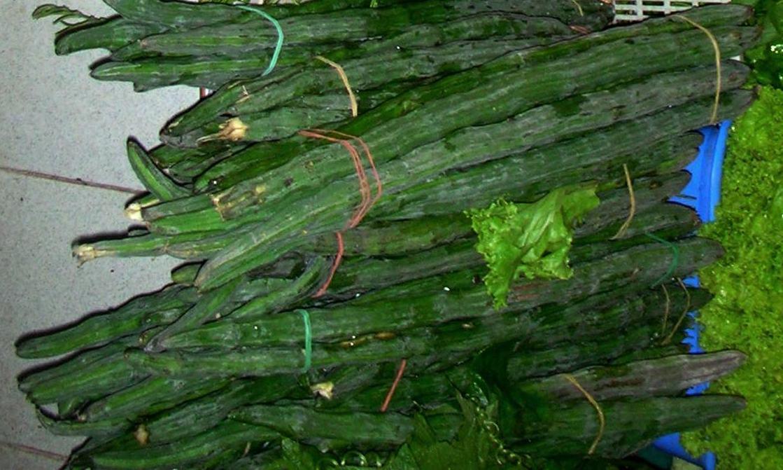 Image of Horseradish Tree
