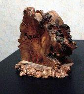 Image of Nothofagus dombeyi