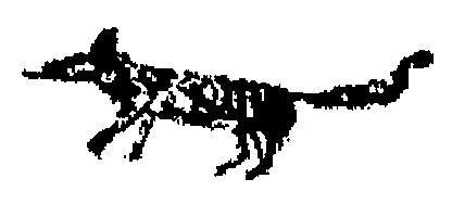 Image of numbat
