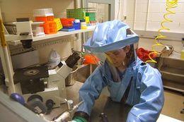 Image of Ebola virus
