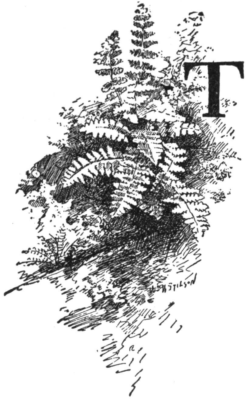 Image of Woodsias