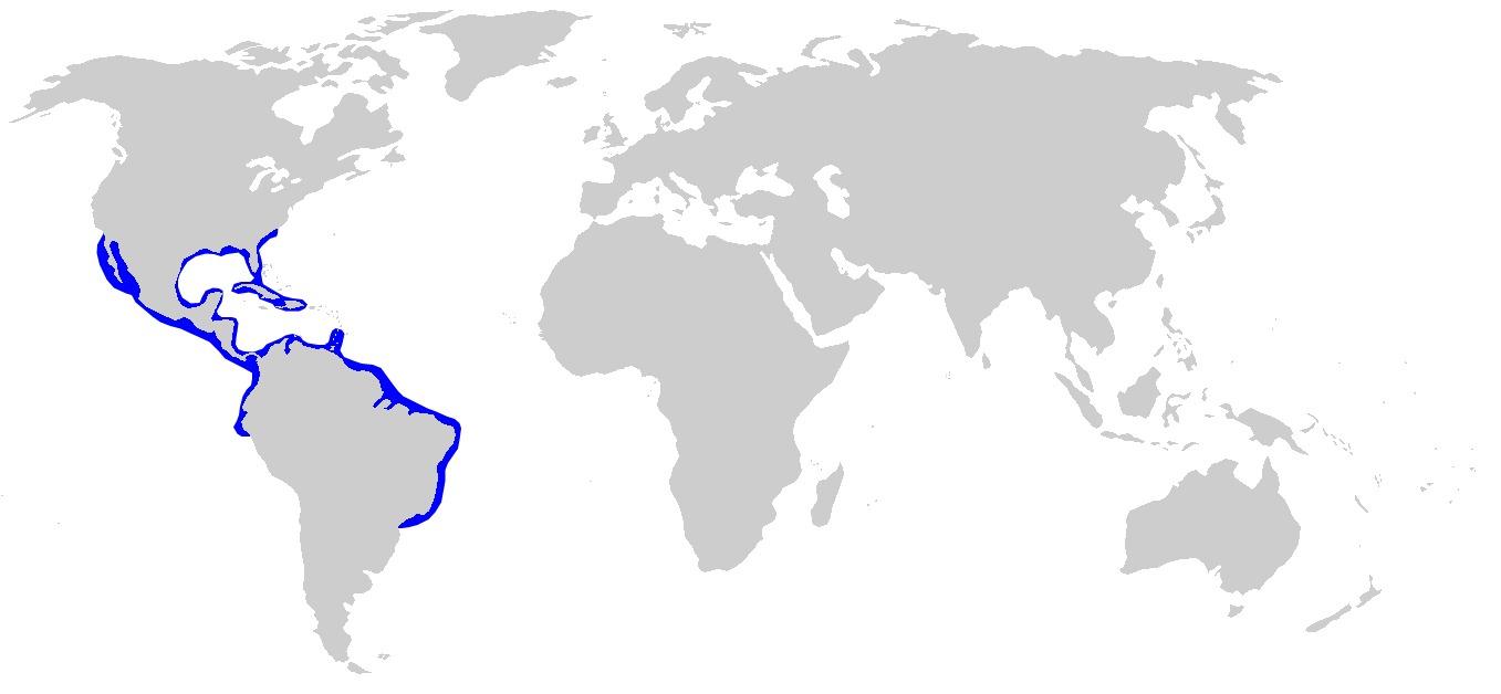 Map of Bonnethead Shark