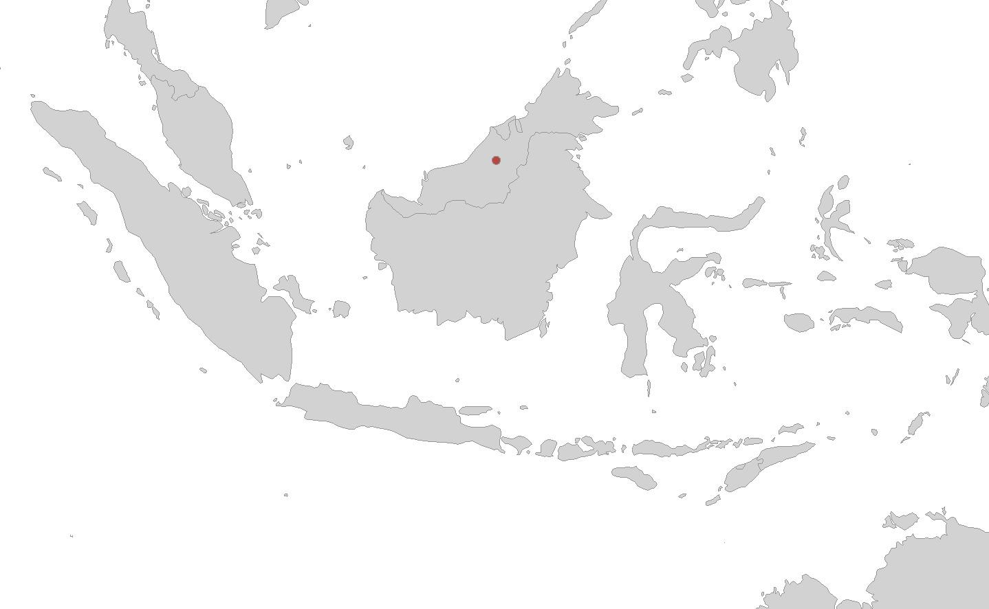 Image of Mount Dulit Caecilian