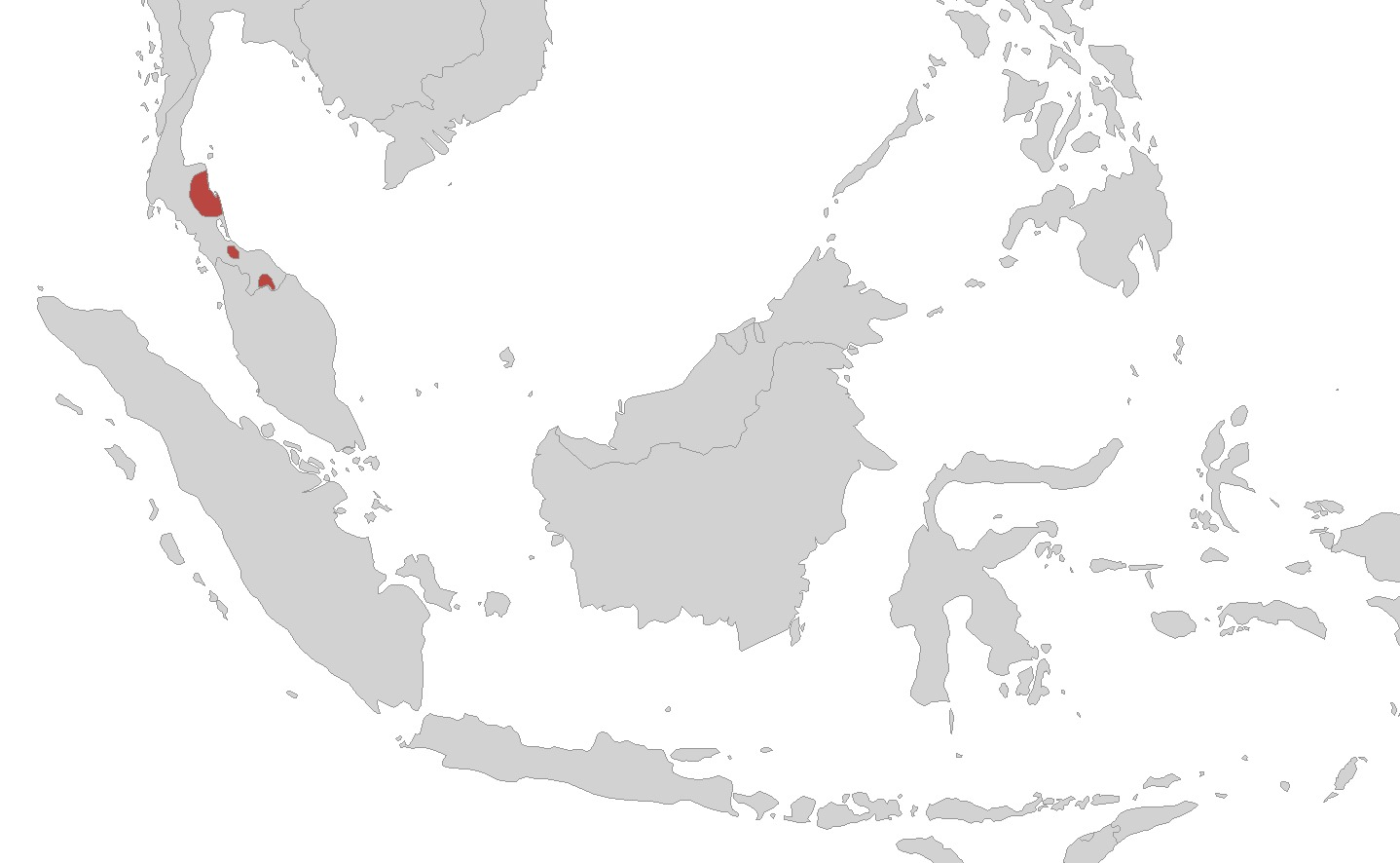 Image of Hillstream Caecilian