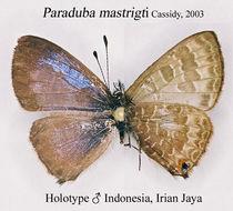 Image of Paraduba