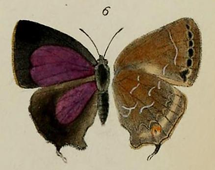Image of Zinaspa