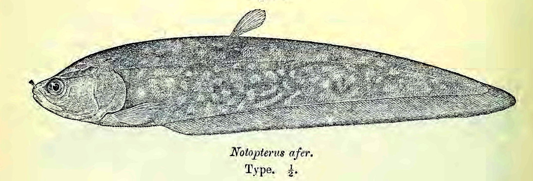 Image of Feather Back