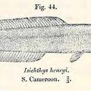 Image of <i>Isichthys henryi</i> Gill 1863