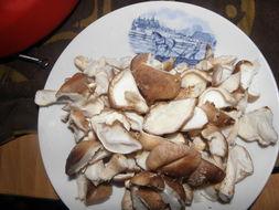 Image of Shiitake mushroom