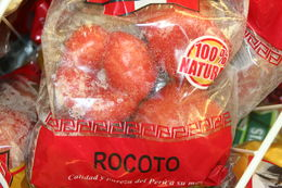 Image of rocoto