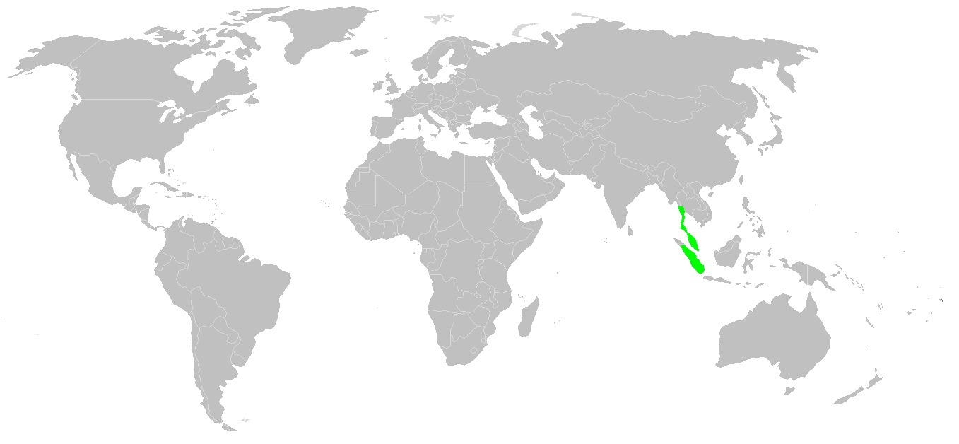 Map of <i>Tapirus indicus</i>
