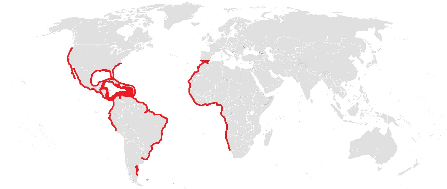 "<span class=""translation_missing"" title=""translation missing: en.medium.untitled.map_image_of, page_name: Thalasseus Boie &amp; F 1822"">Map Image Of</span>"