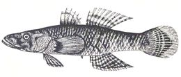Image of Crazy Fish
