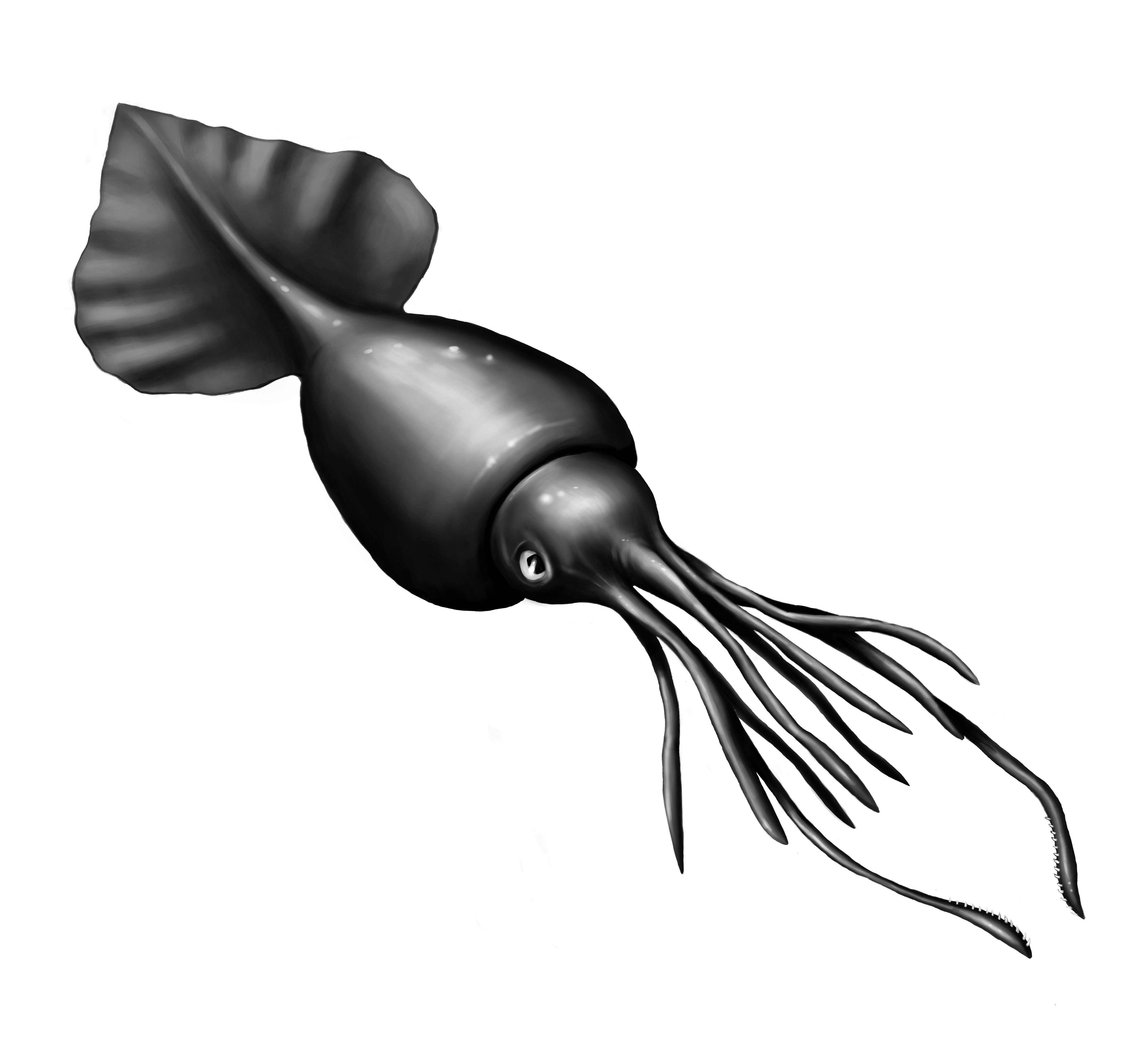 Image of Colossal squid