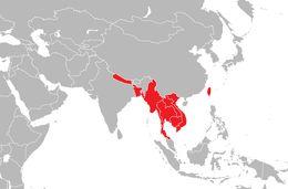 "<span class=""translation_missing"" title=""translation missing: en.medium.untitled.map_image_of, page_name: Tokay Gecko"">Map Image Of</span>"