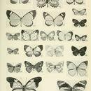 Image of <i>Eresina toroensis</i> Joicey & Talbot 1921