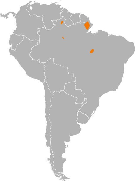 Image of Brazilian Caecilian