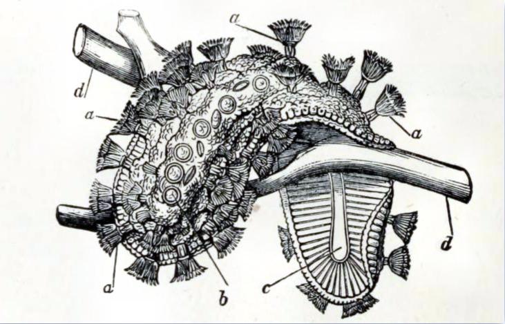 Image of Moss Animal