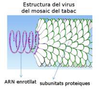 Image of Tobacco mosaic virus