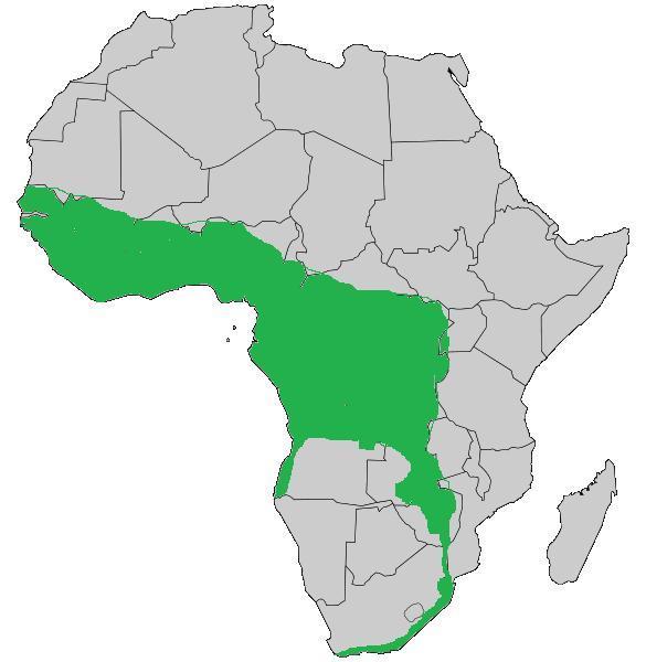 "<span class=""translation_missing"" title=""translation missing: en.medium.untitled.map_image_of, page_name: Forest Cobra"">Map Image Of</span>"