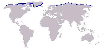 Map of walruses