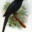 Image of Psittacinae
