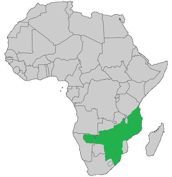 "<span class=""translation_missing"" title=""translation missing: en.medium.untitled.map_image_of, page_name: &lt;i&gt;Naja mossambica&lt;/i&gt; Peters 1854"">Map Image Of</span>"