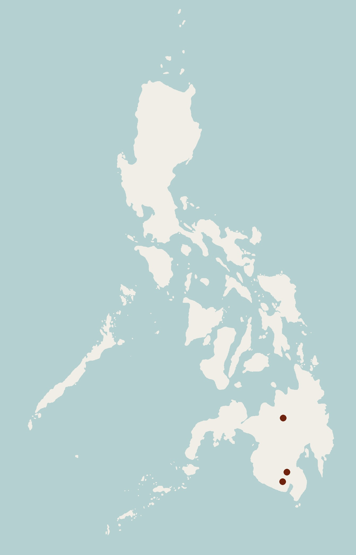 Image of Mindanao Spiny Rat