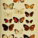 Image of <i>Tetrarhanis nubifera</i> (Druce 1910)
