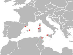 Image of <i>Schmidtea mediterranea</i> Benazzi, Baguna, Ballester & del Papa 1975