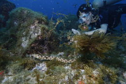 Image of Dark-spotted Snake Eel