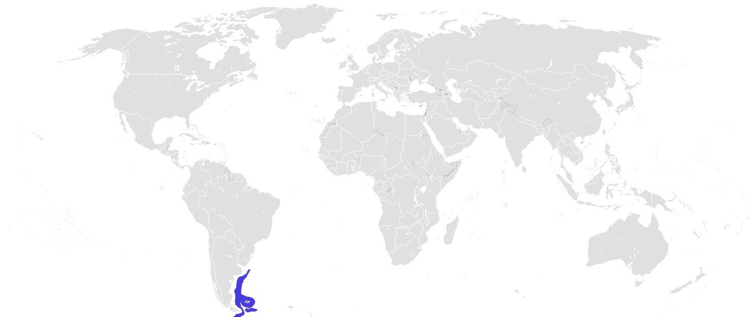 Map of Graytail Skate