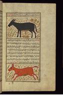 Image of <i>Equus onager</i>