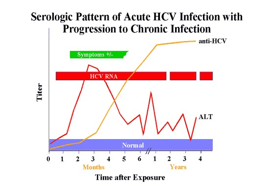 Image of Hepatitis C virus