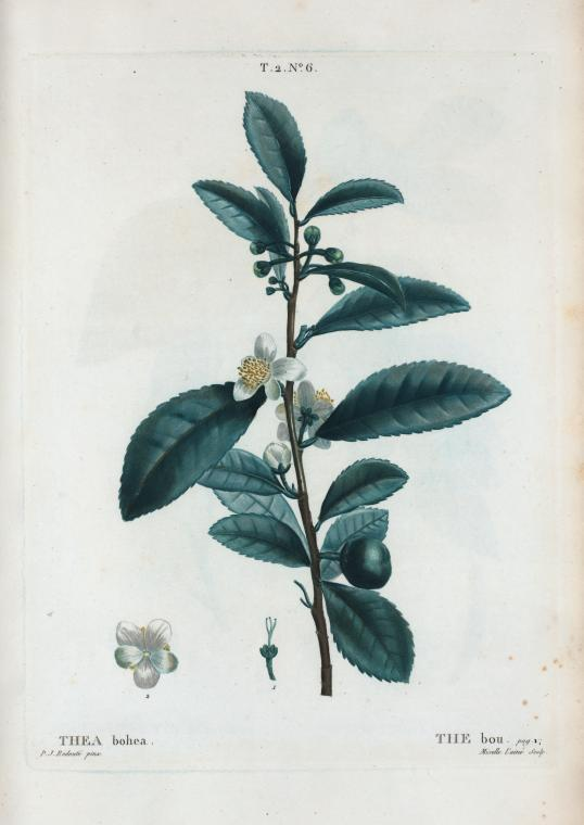 Image of tea