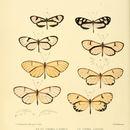 Image of <i>Hypomenitis theudelinda</i> Hewitson 1860
