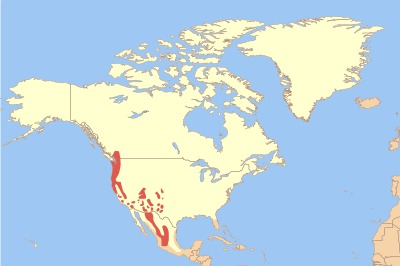Map of Earless Owls
