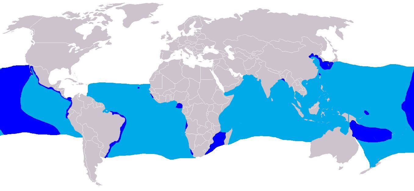 "<span class=""translation_missing"" title=""translation missing: en.medium.untitled.map_image_of, page_name: Crocodile Shark"">Map Image Of</span>"