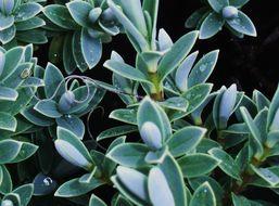 Image of Mermithidae