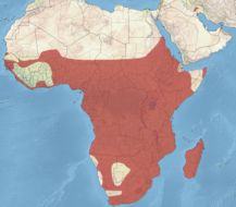 "<span class=""translation_missing"" title=""translation missing: en.medium.untitled.map_image_of, page_name: African Darter"">Map Image Of</span>"