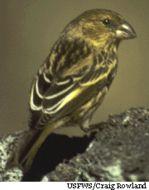 Image of Nihoa